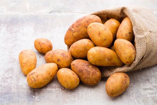 Ziemniak - charakterystyka, uprawa, nawożenie
