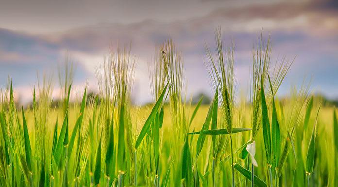 Poznaj zielony wspomagacz zdrowia, który biją rekordy popularności